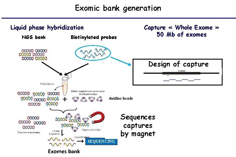 Exomic bank generation Liquid phase hybridization NGS bank Capture « Whole Exome » 50