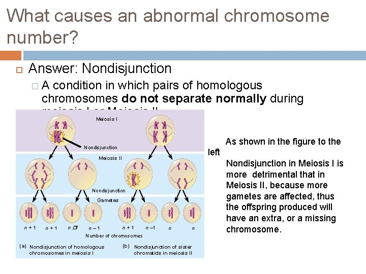 What causes an abnormal chromosome number? Answer: Nondisjunction �A condition in which pairs of