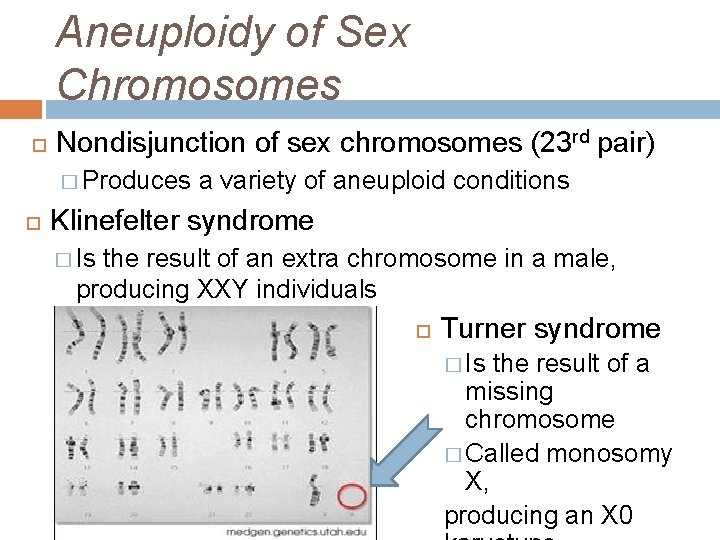 Aneuploidy of Sex Chromosomes Nondisjunction of sex chromosomes (23 rd pair) � Produces a