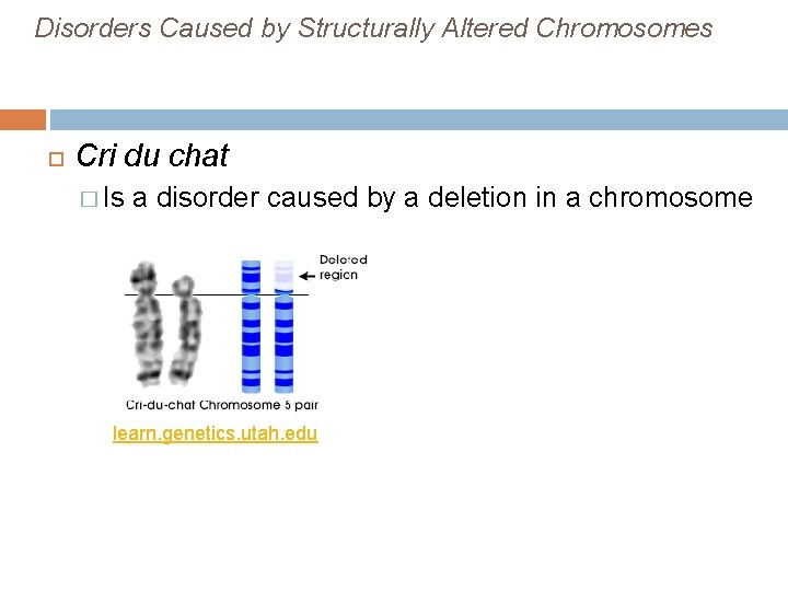 Disorders Caused by Structurally Altered Chromosomes Cri du chat � Is a disorder caused