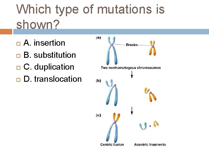 Which type of mutations is shown? A. insertion B. substitution C. duplication D. translocation