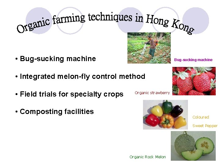 • Bug-sucking machine • Integrated melon-fly control method • Field trials for specialty