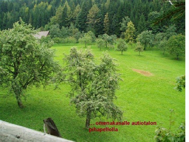 . … omenakasalle autiotalon pihapellolla