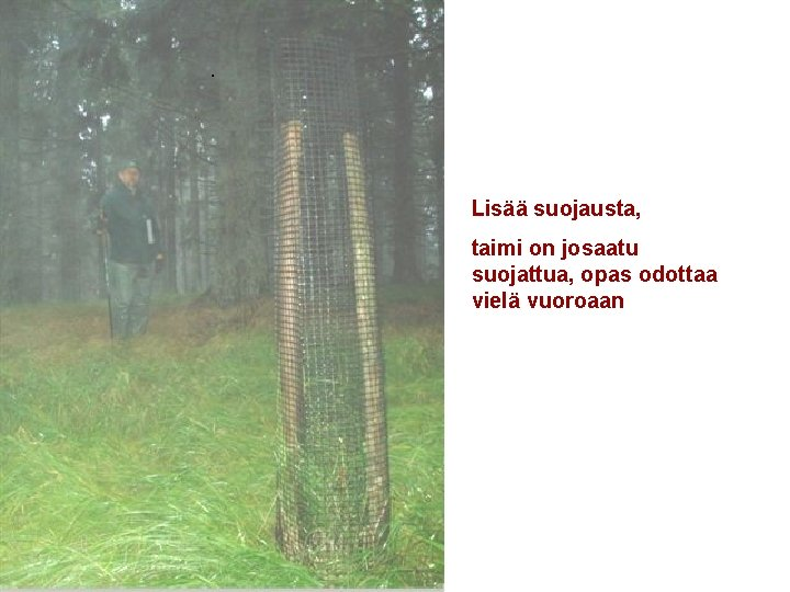 . Lisää suojausta, taimi on josaatu suojattua, opas odottaa vielä vuoroaan