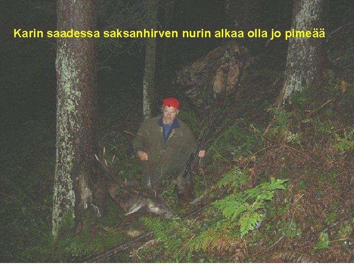 Karin saadessa saksanhirven nurin alkaa olla jo pimeää.
