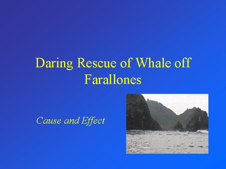 Daring Rescue of Whale off Farallones Cause and Effect