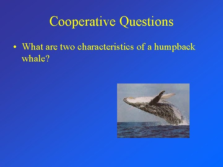 Cooperative Questions • What are two characteristics of a humpback whale?