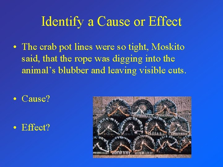 Identify a Cause or Effect • The crab pot lines were so tight, Moskito