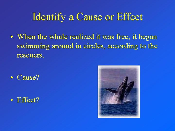 Identify a Cause or Effect • When the whale realized it was free, it
