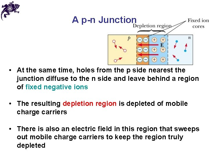 A p-n Junction • At the same time, holes from the p side nearest