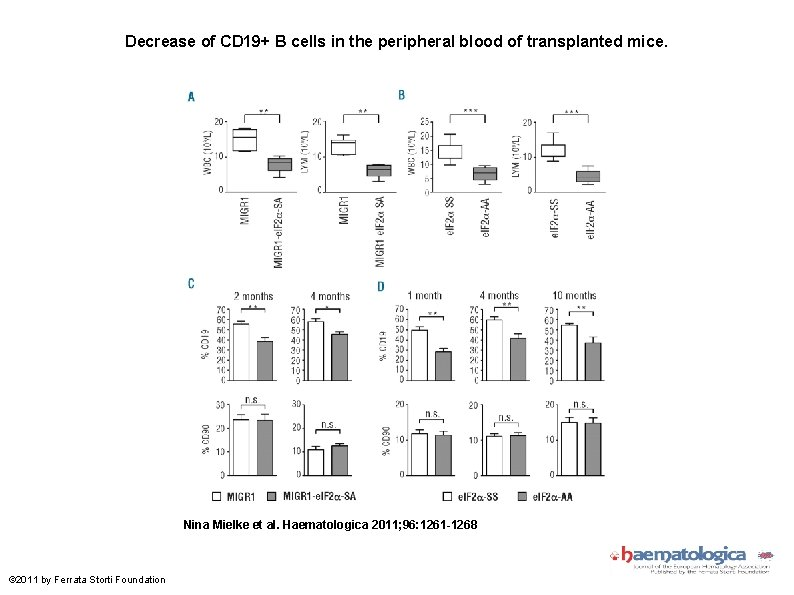 Decrease of CD 19+ B cells in the peripheral blood of transplanted mice. Nina