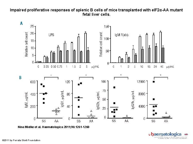 Impaired proliferative responses of splenic B cells of mice transplanted with e. IF 2α-AA