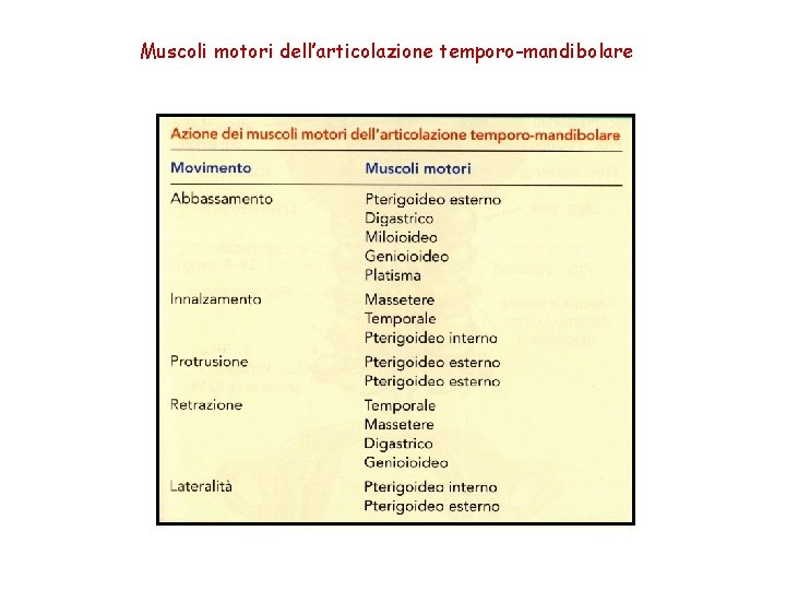 Muscoli motori dell'articolazione temporo-mandibolare