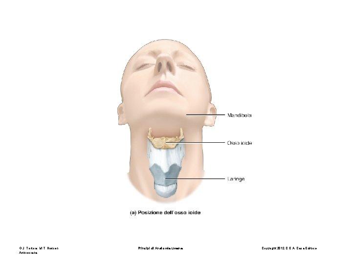 G. J. Tortora, M. T. Nielsen Principi di Anatomia umana Copyright 2012 C. E.