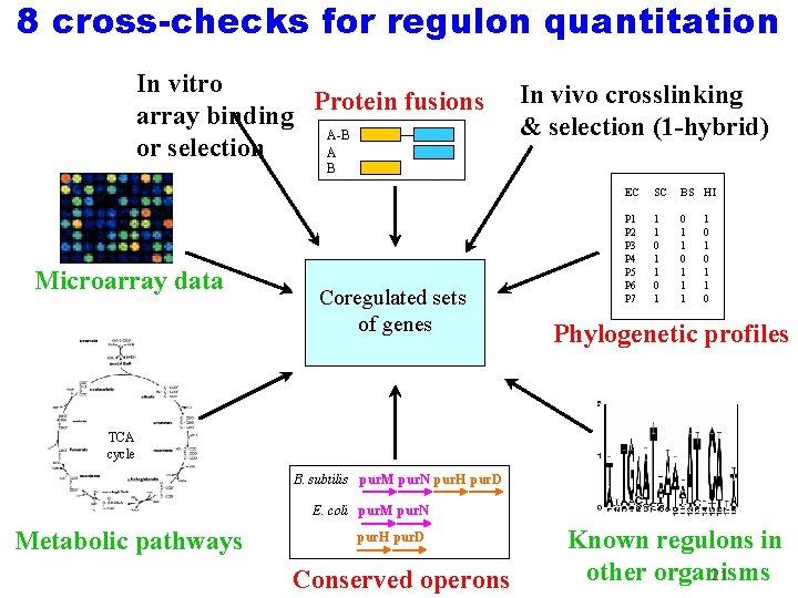 8 cross-checks for regulon quantitation In vitro Protein fusions array binding A-B or selection