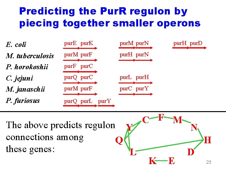 Predicting the Pur. R regulon by piecing together smaller operons E. coli M. tuberculosis