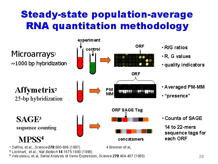 Steady-state population-average RNA quantitation methodology experiment Microarrays 1 ORF control • R/G ratios •