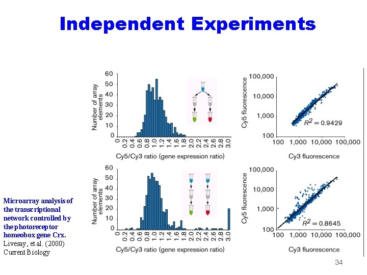 Independent Experiments Microarray analysis of the transcriptional network controlled by the photoreceptor homeobox gene