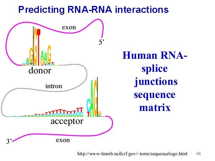 Predicting RNA-RNA interactions 46