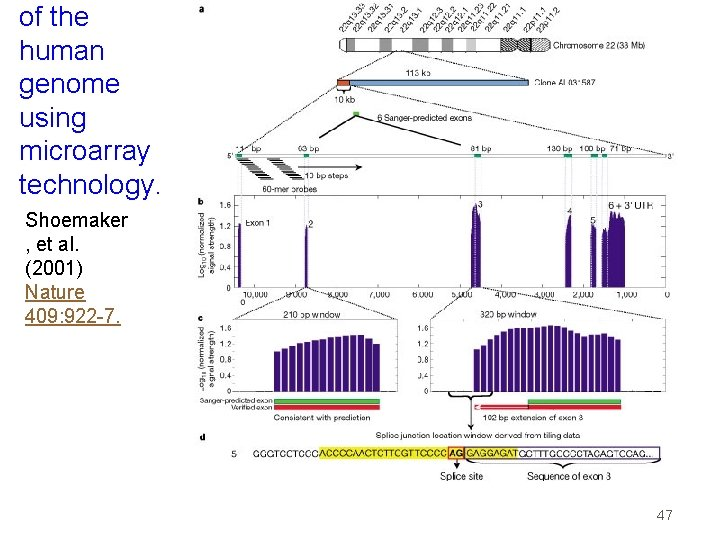 of the human genome using microarray technology. Shoemaker , et al. (2001) Nature 409:
