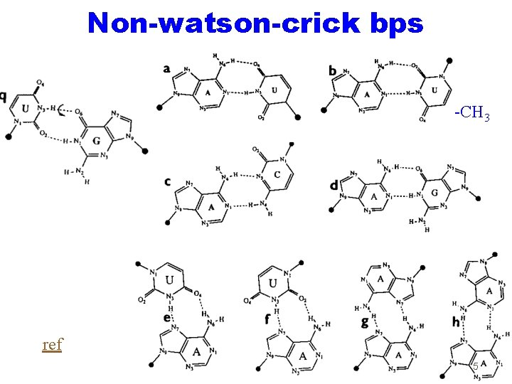 Non-watson-crick bps -CH 3 ref 5