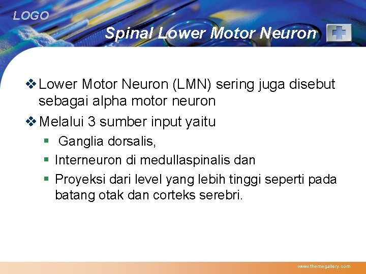 LOGO Spinal Lower Motor Neuron v Lower Motor Neuron (LMN) sering juga disebut sebagai