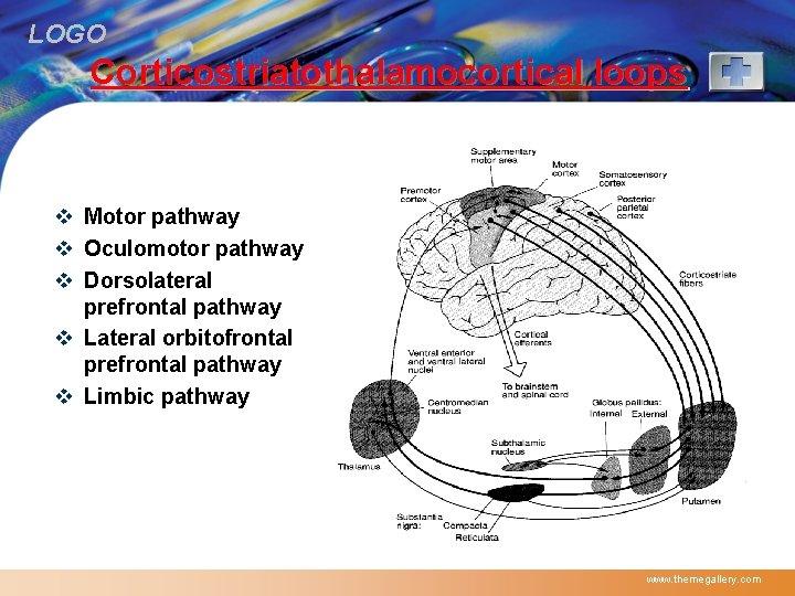 LOGO Corticostriatothalamocortical loops v Motor pathway v Oculomotor pathway v Dorsolateral prefrontal pathway v