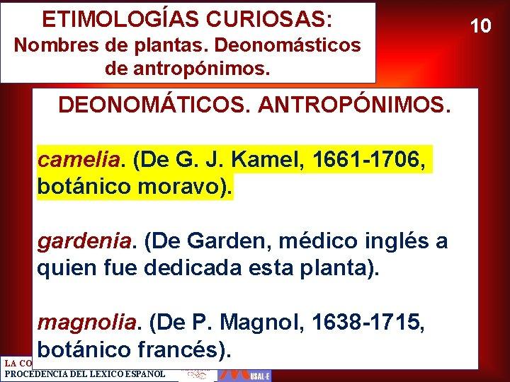 ETIMOLOGÍAS CURIOSAS: Nombres de plantas. Deonomásticos de antropónimos. DEONOMÁTICOS. ANTROPÓNIMOS. camelia. (De G. J.