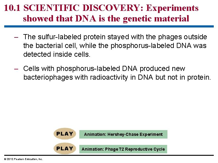 10. 1 SCIENTIFIC DISCOVERY: Experiments showed that DNA is the genetic material – The