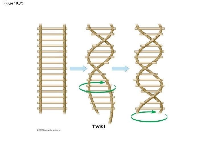 Figure 10. 3 C Twist