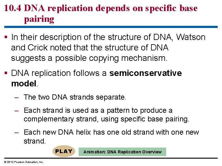 10. 4 DNA replication depends on specific base pairing § In their description of