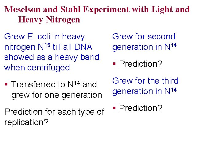 Meselson and Stahl Experiment with Light and Heavy Nitrogen Grew E. coli in heavy