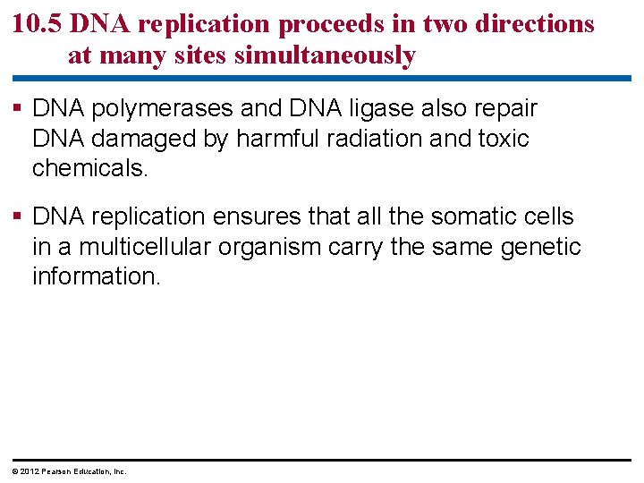 10. 5 DNA replication proceeds in two directions at many sites simultaneously § DNA