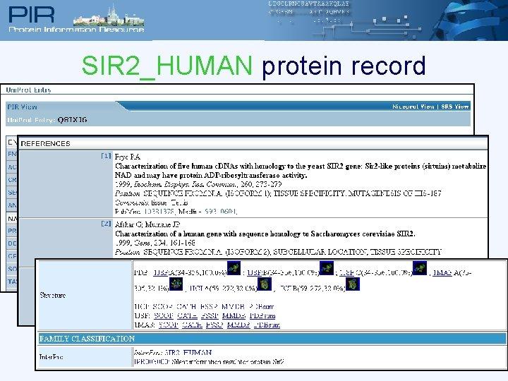 SIR 2_HUMAN protein record