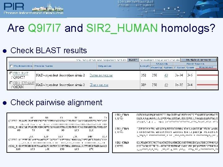 Are Q 9 I 7 I 7 and SIR 2_HUMAN homologs? l Check BLAST