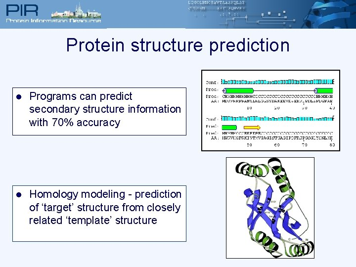 Protein structure prediction l Programs can predict secondary structure information with 70% accuracy l