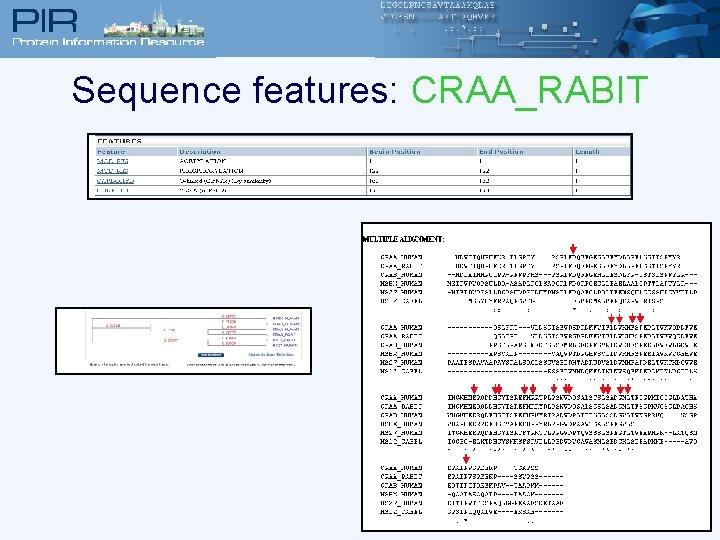 Sequence features: CRAA_RABIT
