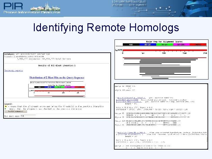 Identifying Remote Homologs