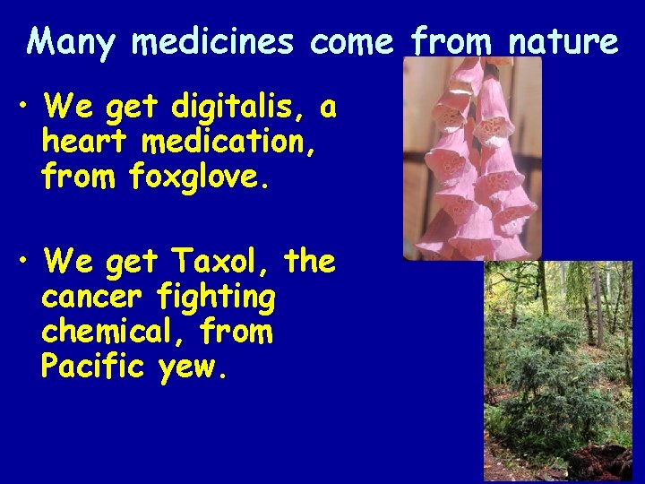 Many medicines come from nature • We get digitalis, a heart medication, from foxglove.