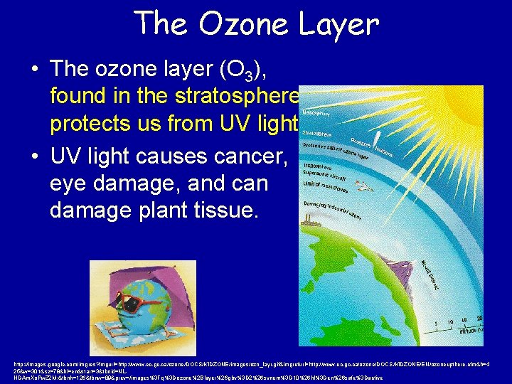 The Ozone Layer • The ozone layer (O 3), found in the stratosphere, protects