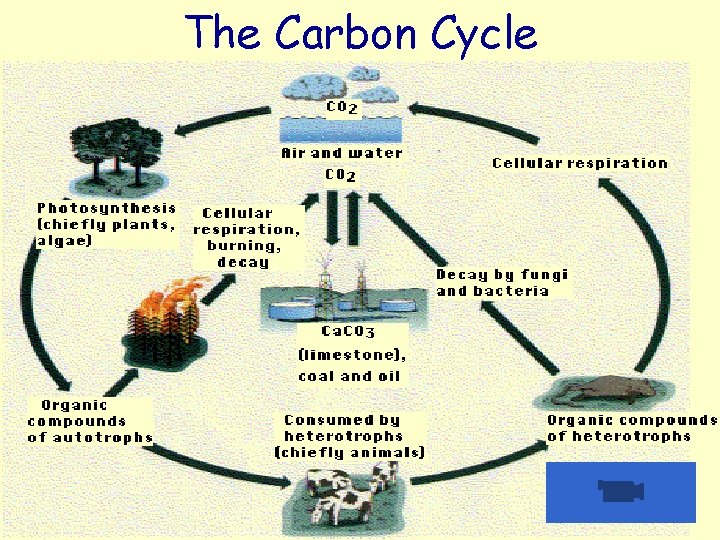The Carbon Cycle http: //www. windows. ucar. edu/earth/climate/images/carboncycle. jpg