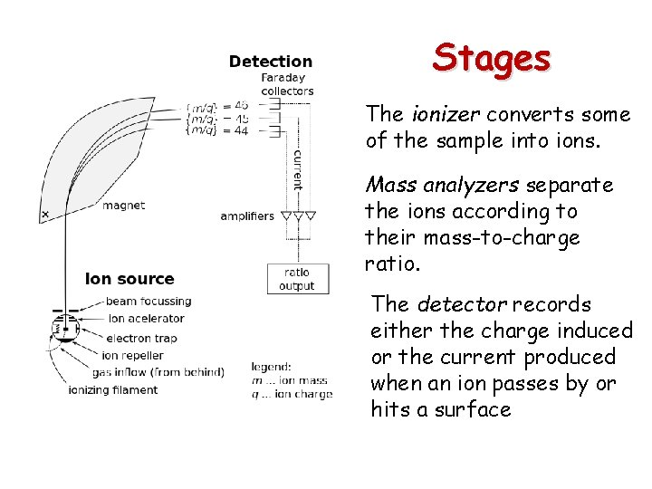 Stages The ionizer converts some of the sample into ions. Mass analyzers separate the