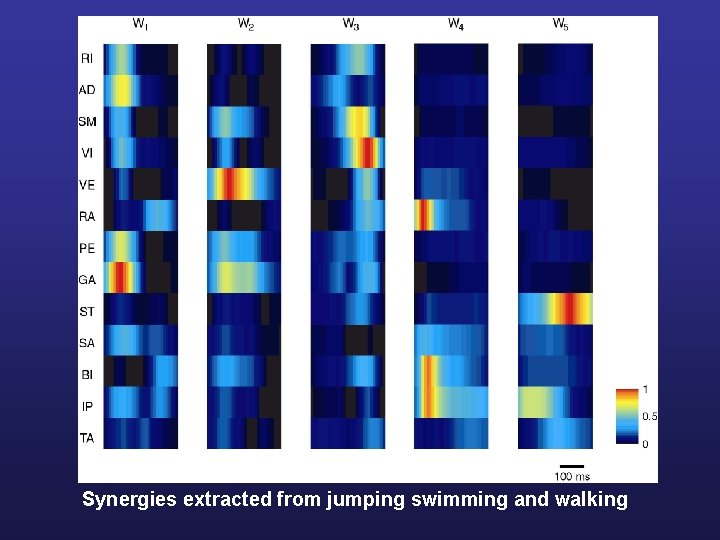 Synergies extracted from jumping swimming and walking
