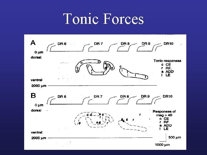 Tonic Forces
