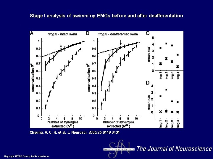 Stage I analysis of swimming EMGs before and after deafferentation Cheung, V. C. K.