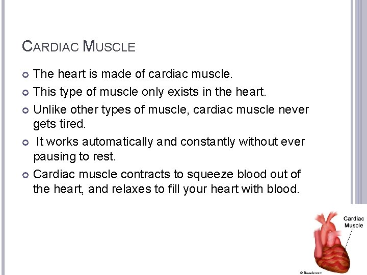 CARDIAC MUSCLE The heart is made of cardiac muscle. This type of muscle only