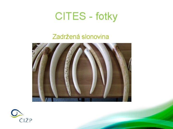 CITES - fotky Zadržená slonovina