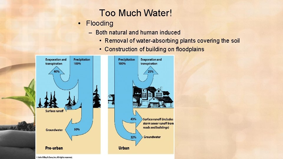 Too Much Water! • Flooding – Both natural and human induced • Removal of