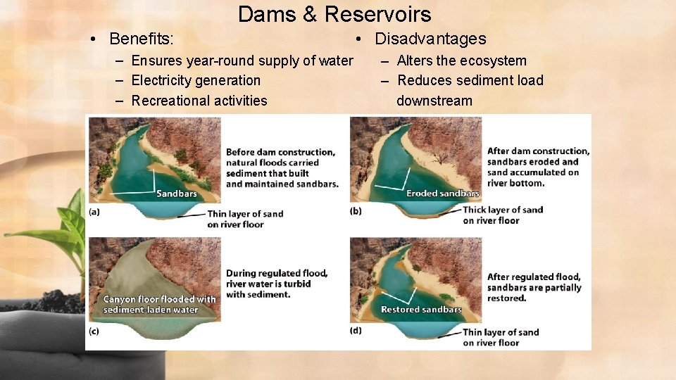 Dams & Reservoirs • Benefits: – Ensures year-round supply of water – Electricity generation