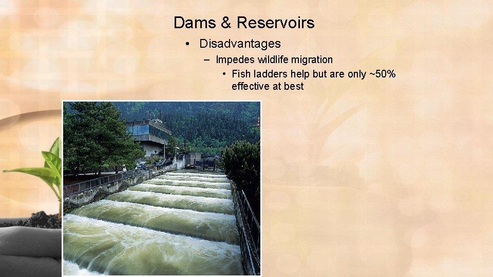 Dams & Reservoirs • Disadvantages – Impedes wildlife migration • Fish ladders help but